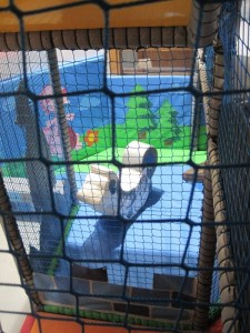 The toddlers' play area